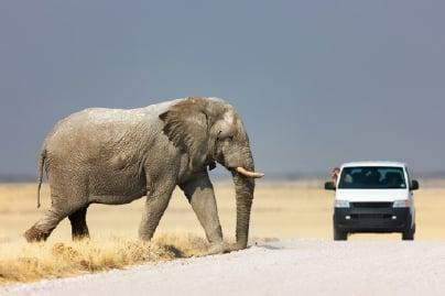 bilutleie-leiebil-elefant