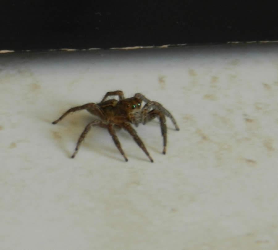 Se! En edderkopp!