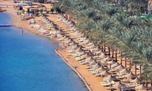 rodehavet egypt strand palmer 300x179 Over 11000 turister ankommer Hurghada
