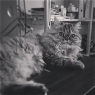 lulu katt skrivebord1 Miss lovely